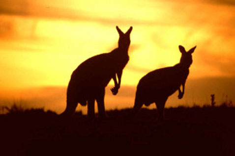 PRESENTARE LA DICHIARAZIONE DEI REDDITI IN AUSTRALIA